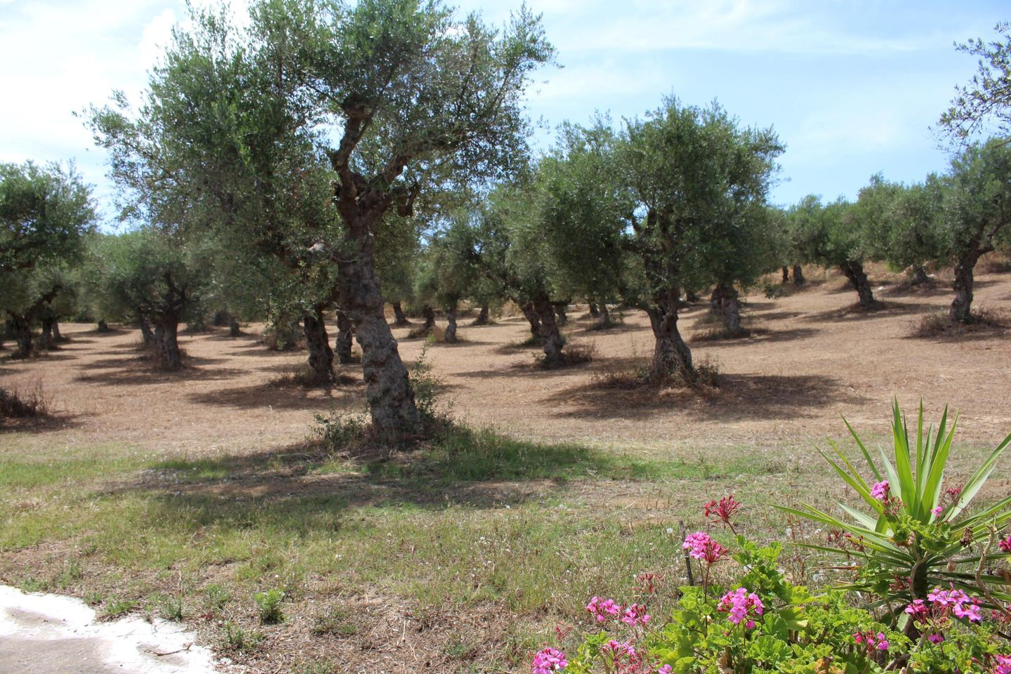 Holiday apartment SPOURGITIS (168162), Peroulia, , Peloponnese, Greece, picture 15