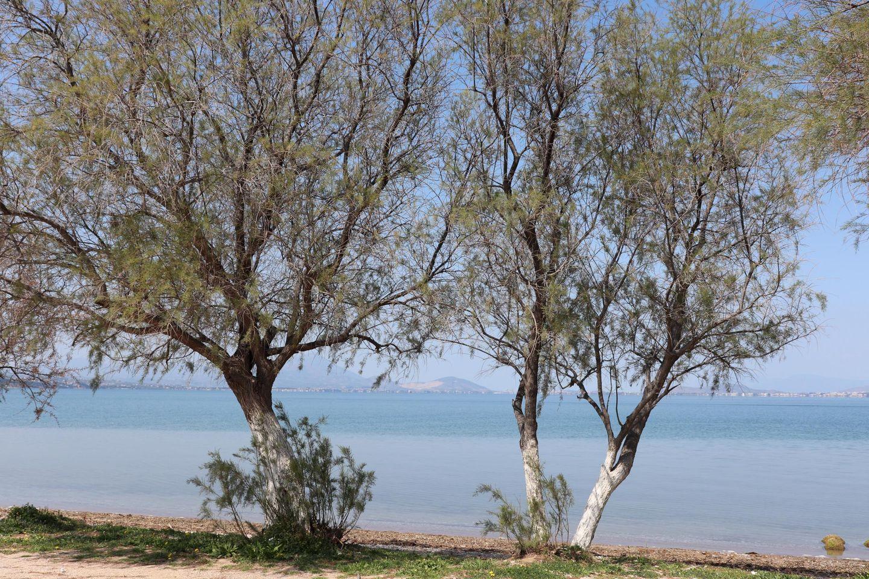 Holiday house CHALKOUTSI (967340), Skala Oropou, , Attica, Greece, picture 41