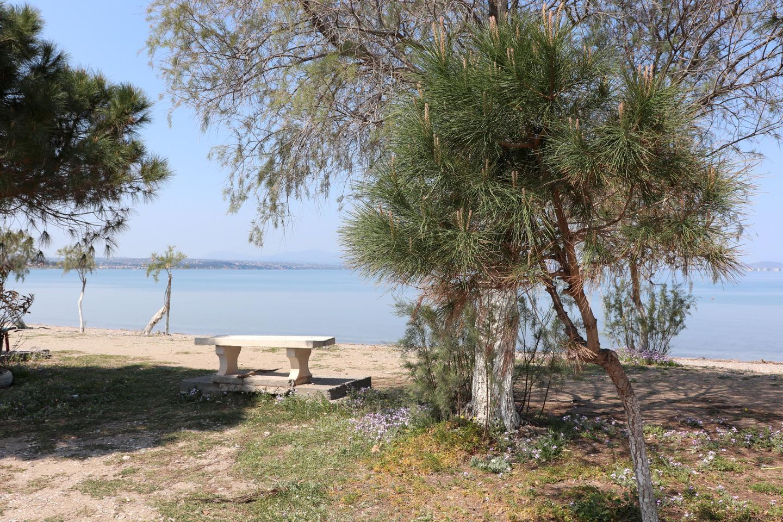 Holiday house CHALKOUTSI (967340), Skala Oropou, , Attica, Greece, picture 43