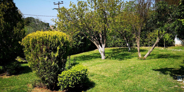 Holiday house CHALKOUTSI (967340), Skala Oropou, , Attica, Greece, picture 32