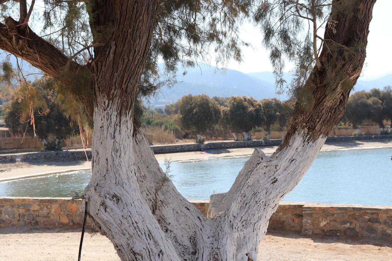 Ferienwohnung KOUNENOS 2 (168007), Istron, Kreta Nordküste, Kreta, Griechenland, Bild 29