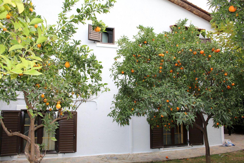 Ferienhaus KONSTANTINA (1745443), Skala Oropou, , Attika, Griechenland, Bild 20