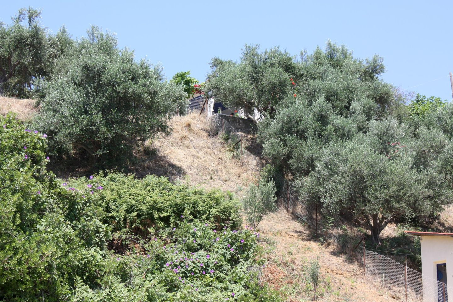 Holiday house FOTIOS (168159), Peroulia, , Peloponnese, Greece, picture 21