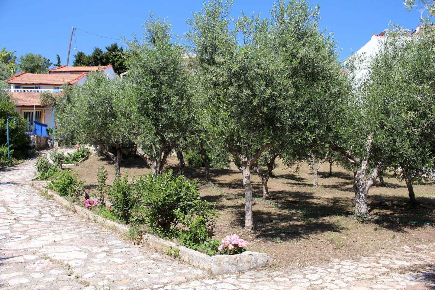 Holiday house PARADIES (168170), Chrani, , Peloponnese, Greece, picture 17