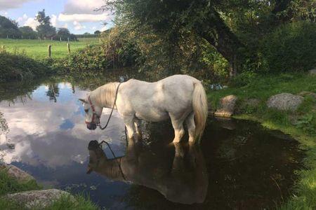 Unser Pony beim Baden
