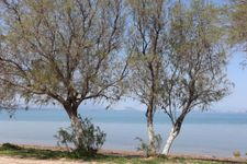 Strand von Chalkoutsi nach ca. 650m