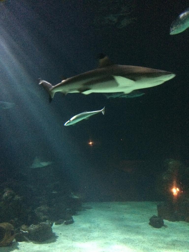 Haie im Sylt Aquarium