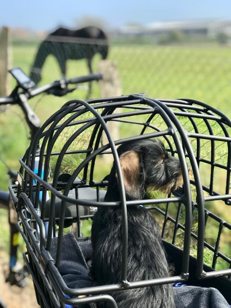 Fahrradtour mit Hund auf Sylt